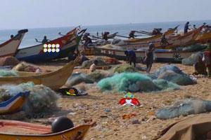逃离海鲜市场